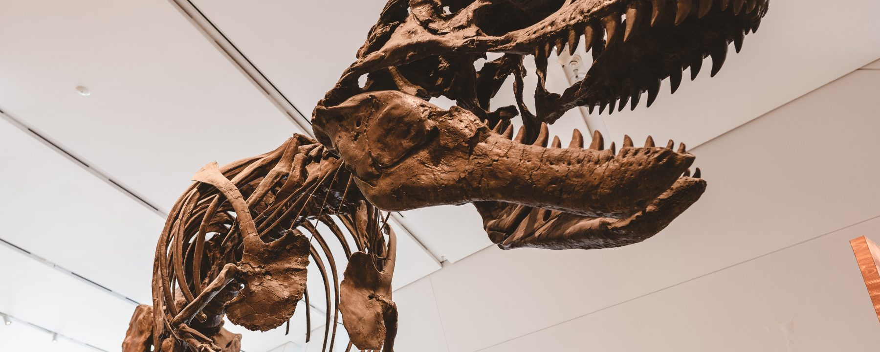 Innovation workshop disruption teknik cannibal spil dinosaur