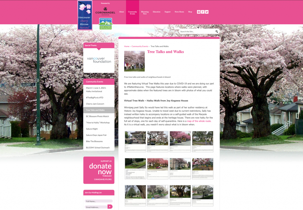 vancouver cherry blossom walk virtuel turisme